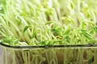 春季吃这14种蔬菜降火