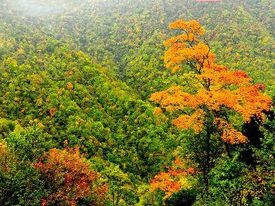 【金秋时节】又是一年枫叶红 天书峡里赏美景
