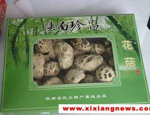 西�l蘑菇