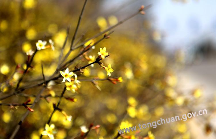 花儿盛开的季节
