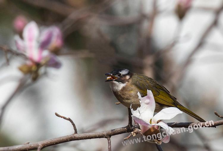 春日里的鸟语花香